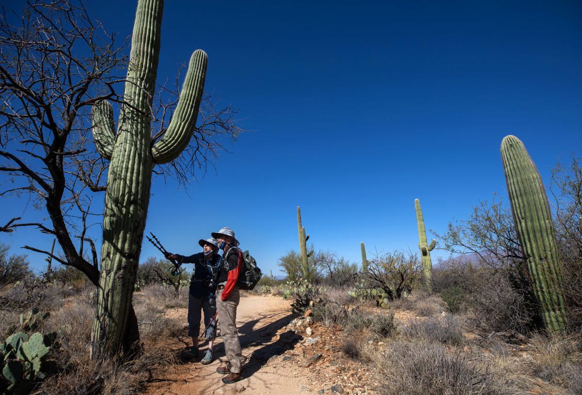 Saguaro National Park's 2020 Saguaro Census
