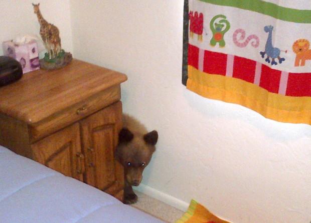 In reversal of Goldilocks tale, cub checks out Sonoita home
