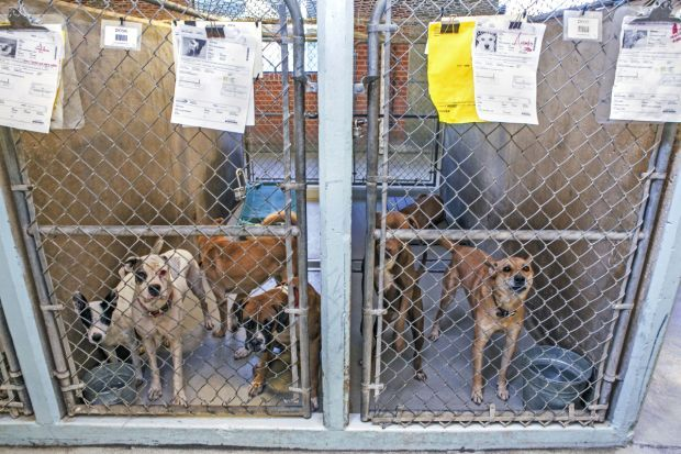 Overcrowding at Pima Animal Care Center
