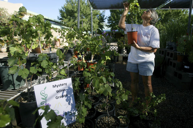 Applications due Sept. 1 for Pima County master gardeners class