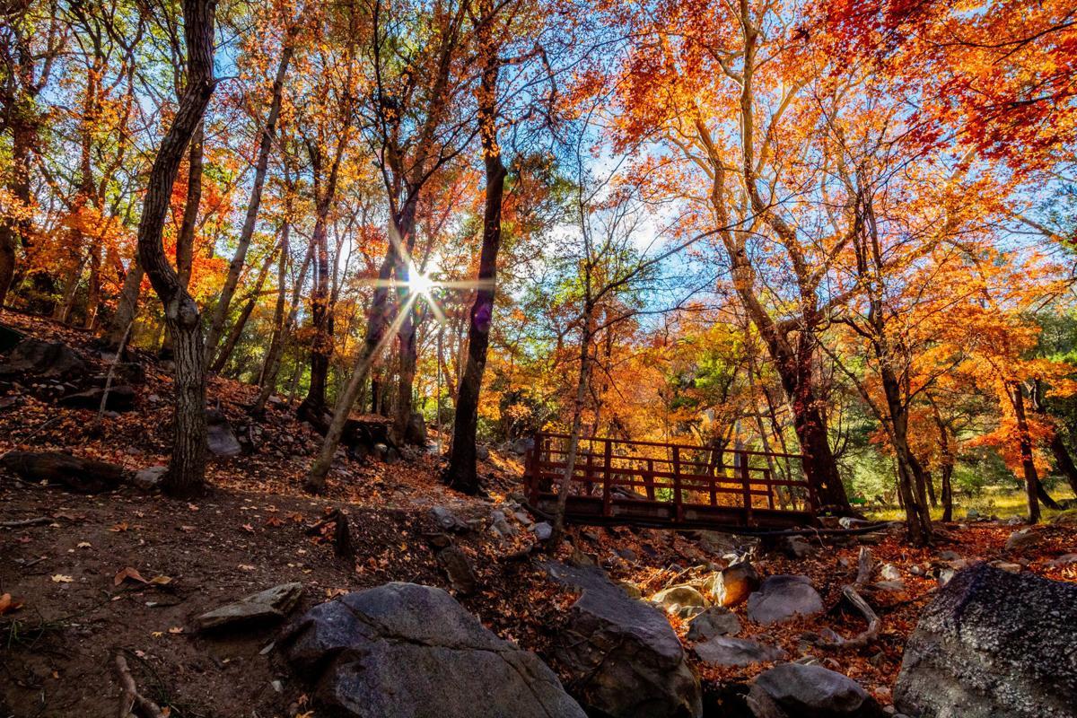 Adventures in Nature Photo Contest / Trenton Gullikson