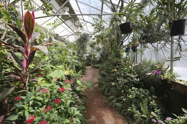 Ordinaire Tucson Botanical Gardens