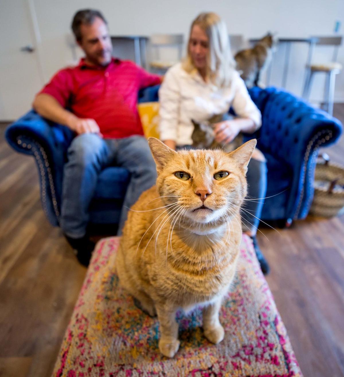 El Jefe Cat Lounge