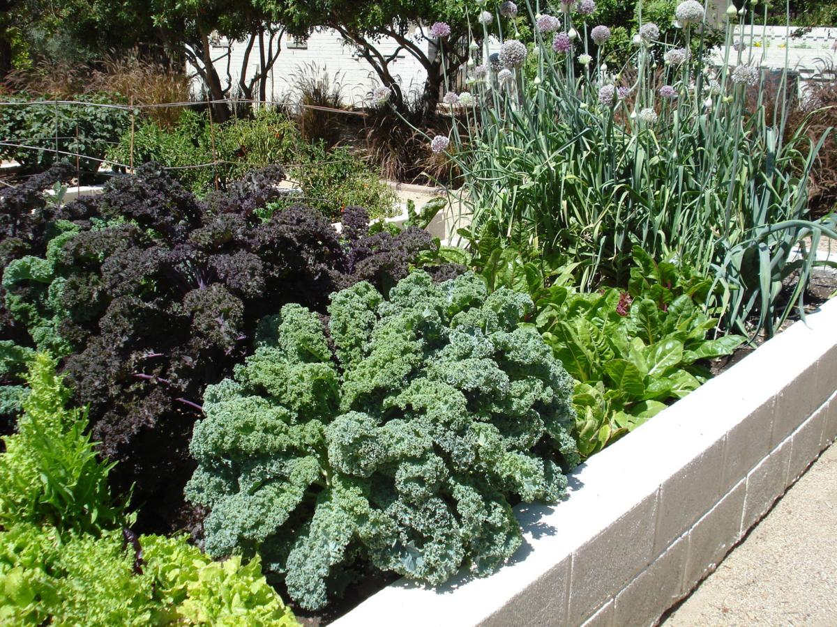 Eastern Facing Vegetable Garden Will Fare Best In Desert Home