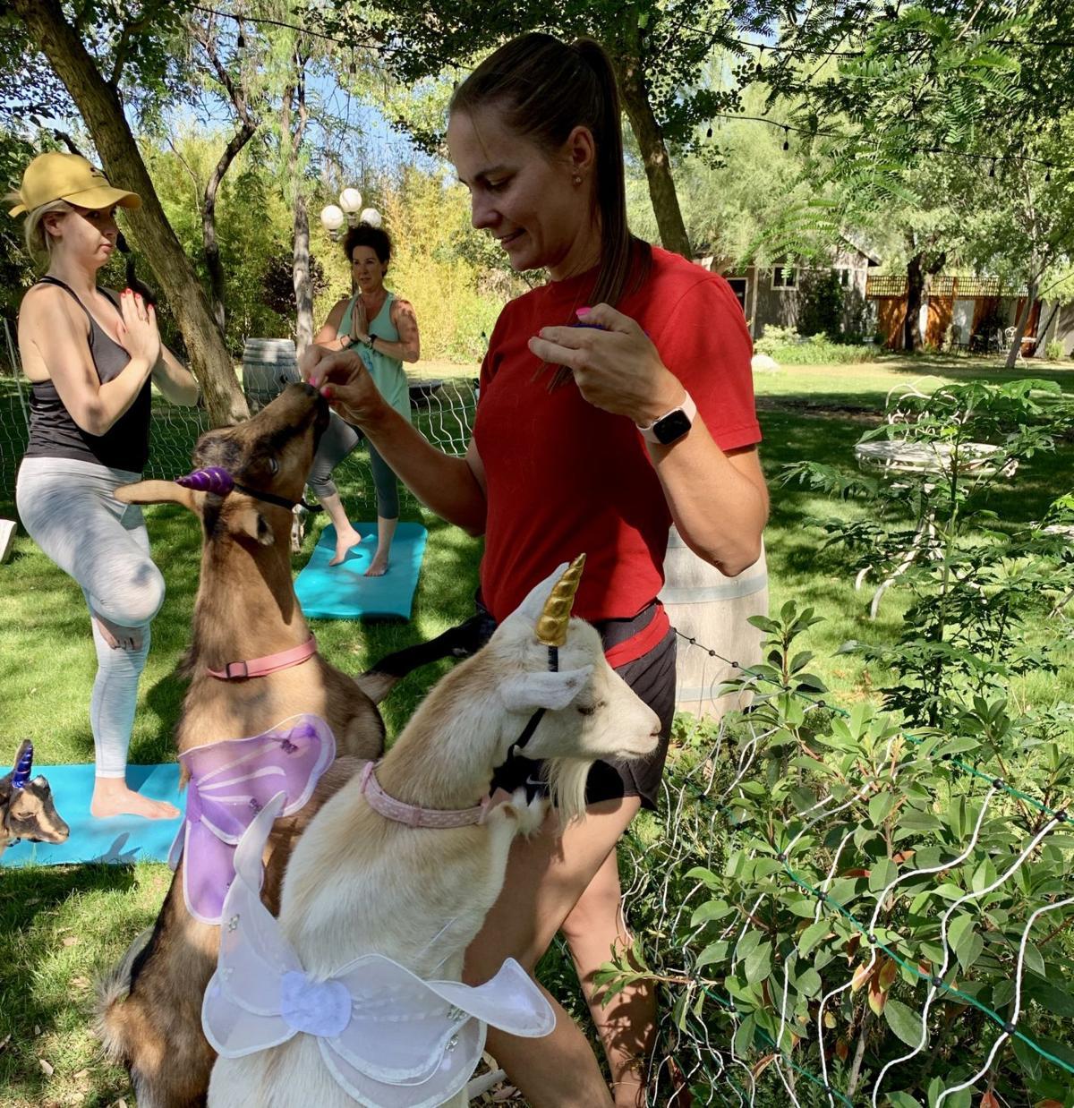 Goat yoga Emily Haddon