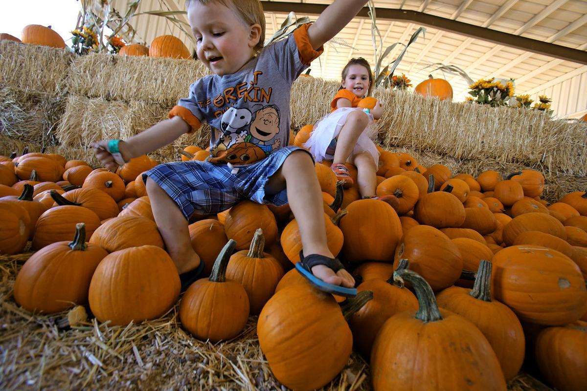 Marana Pumpkin Patch and Farm Festival