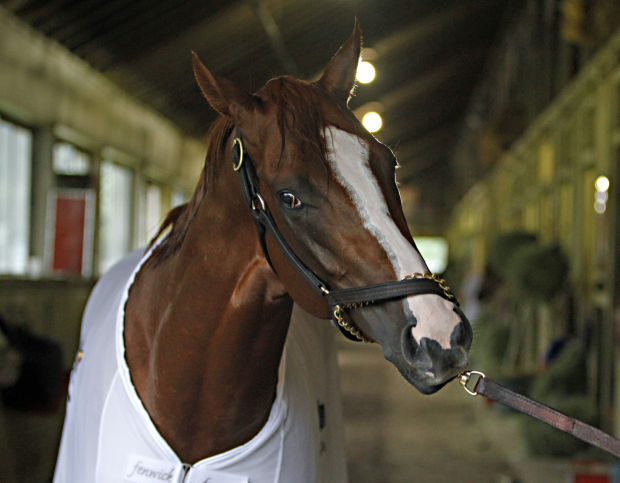 California Chrome: Is he the horse that can do?