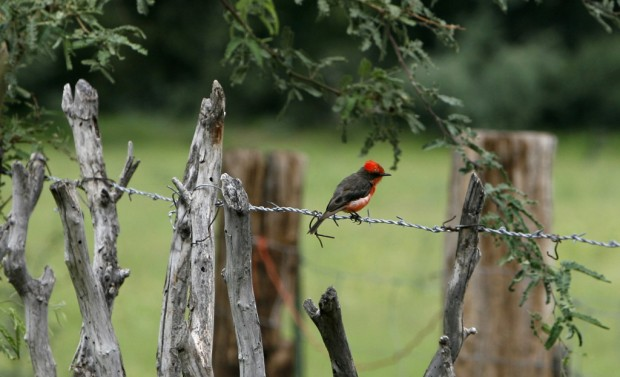 Bird festival draws participants from 20 states for August event