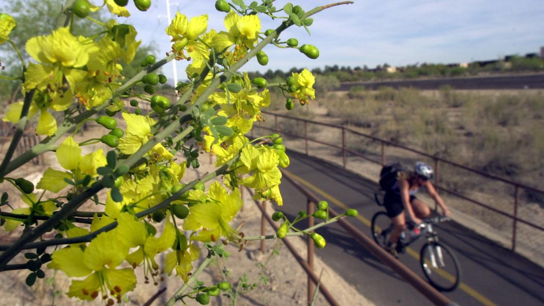 11 things you didnt know about palo verde trees outdoors and 11 things you didnt know about palo verde trees outdoors and events tucson mightylinksfo