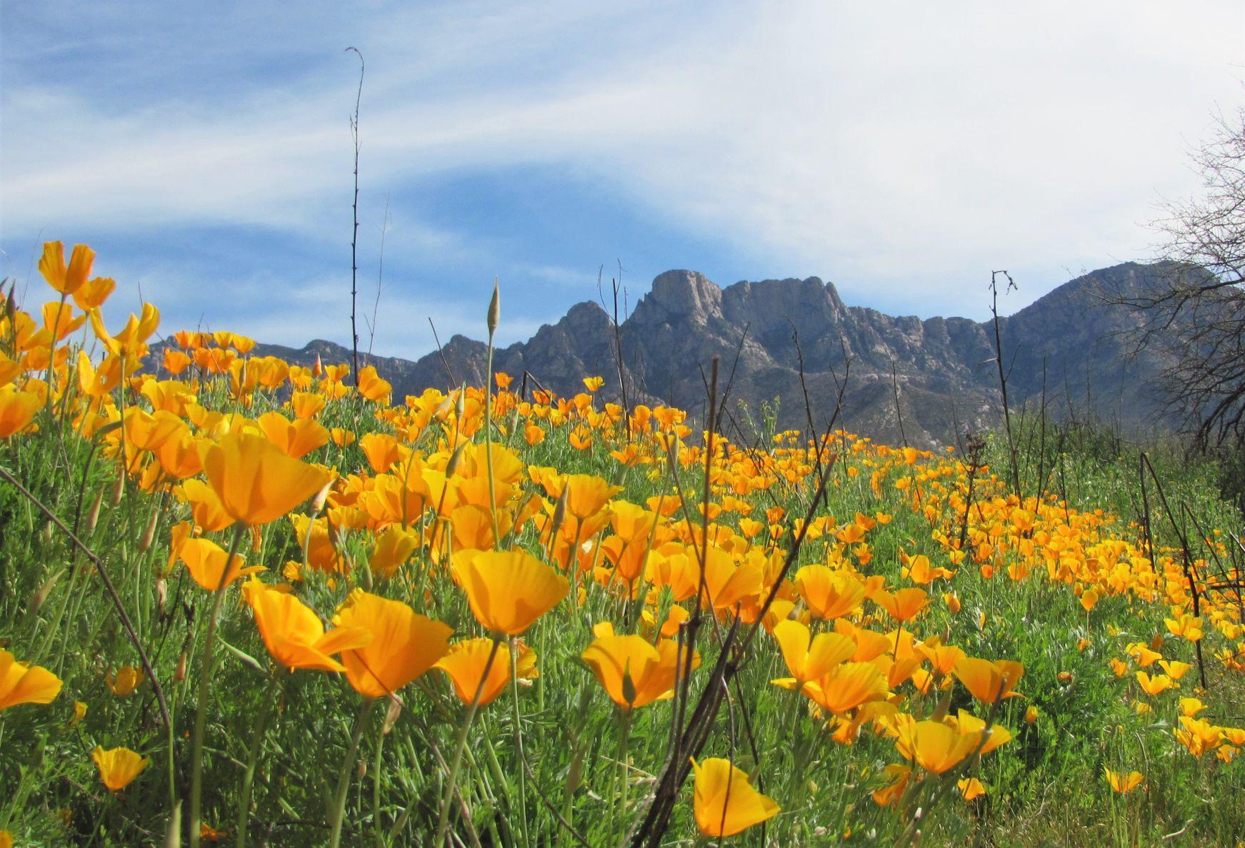 Warm Weather Fields of blooms