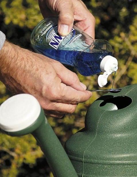Dish soap useful in garden, also | Home & Garden | tucson com