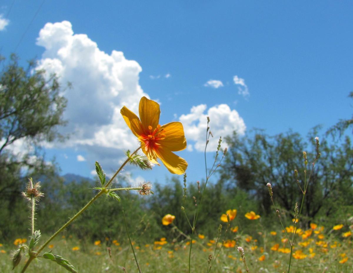 Summer beauty in Madera Canyon