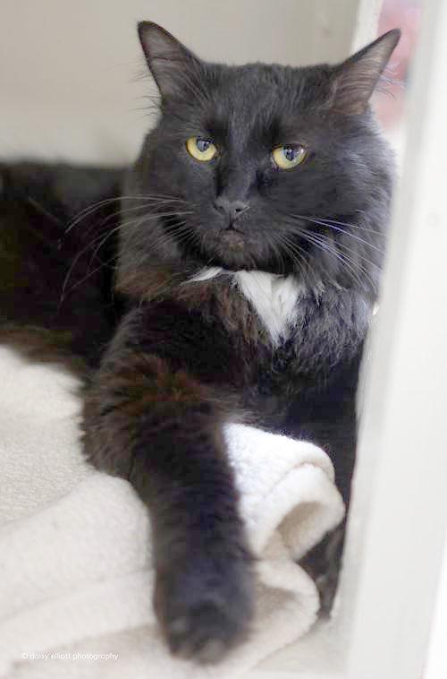 Adopt A Hermitage Cat