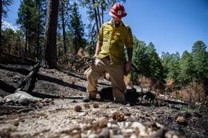 Photos: The Bighorn Fire burn scar in the Santa Catalina Mountains