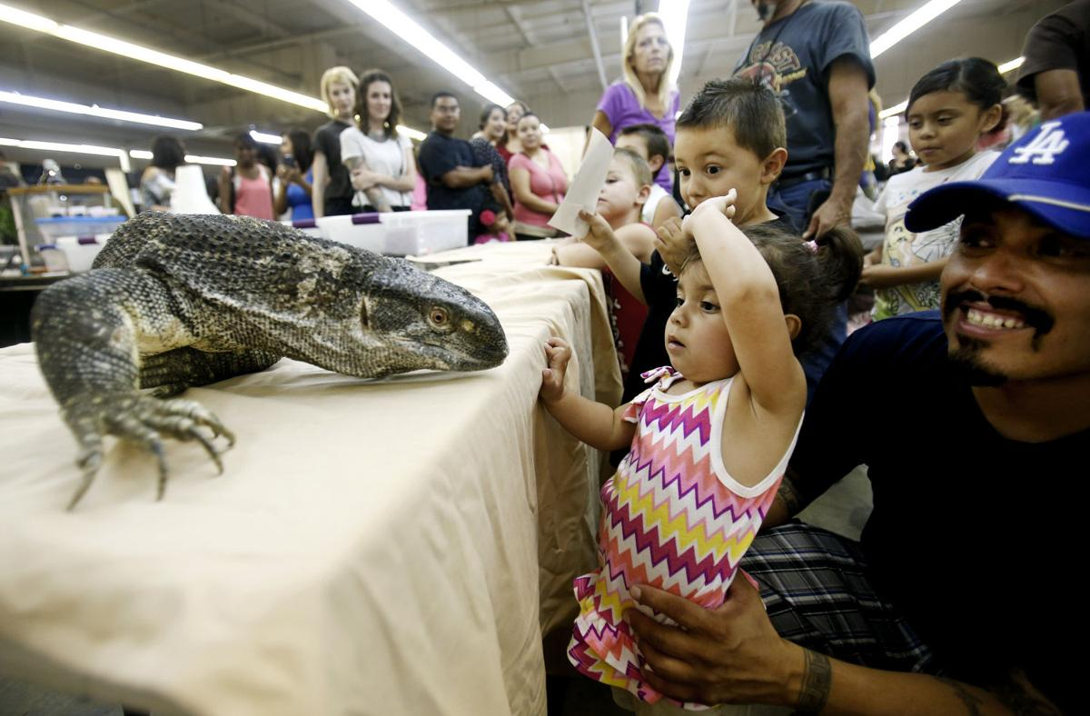 Tucson Reptile and Amphibian Show