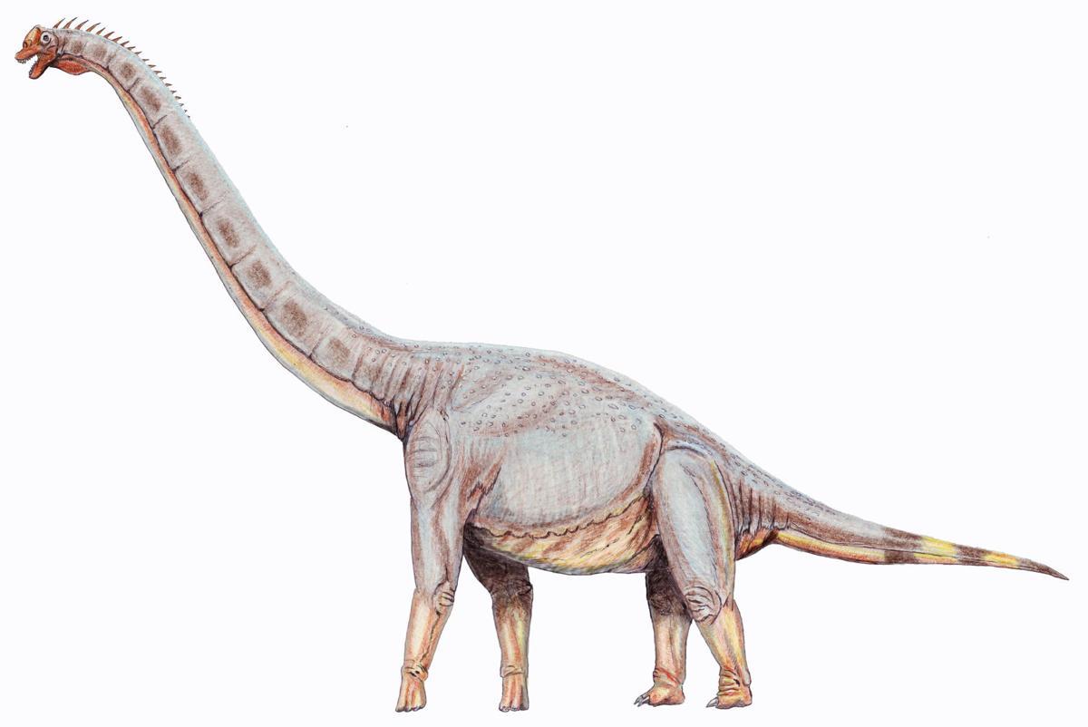 Sonorasaurus