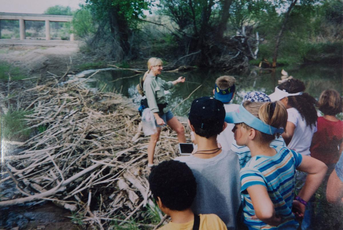 Beavers on the San Pedro River