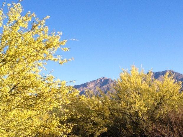 Our dazzling desert