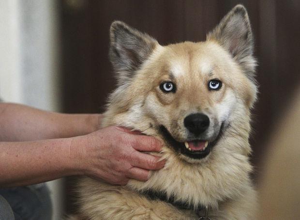 Found dog Kanga