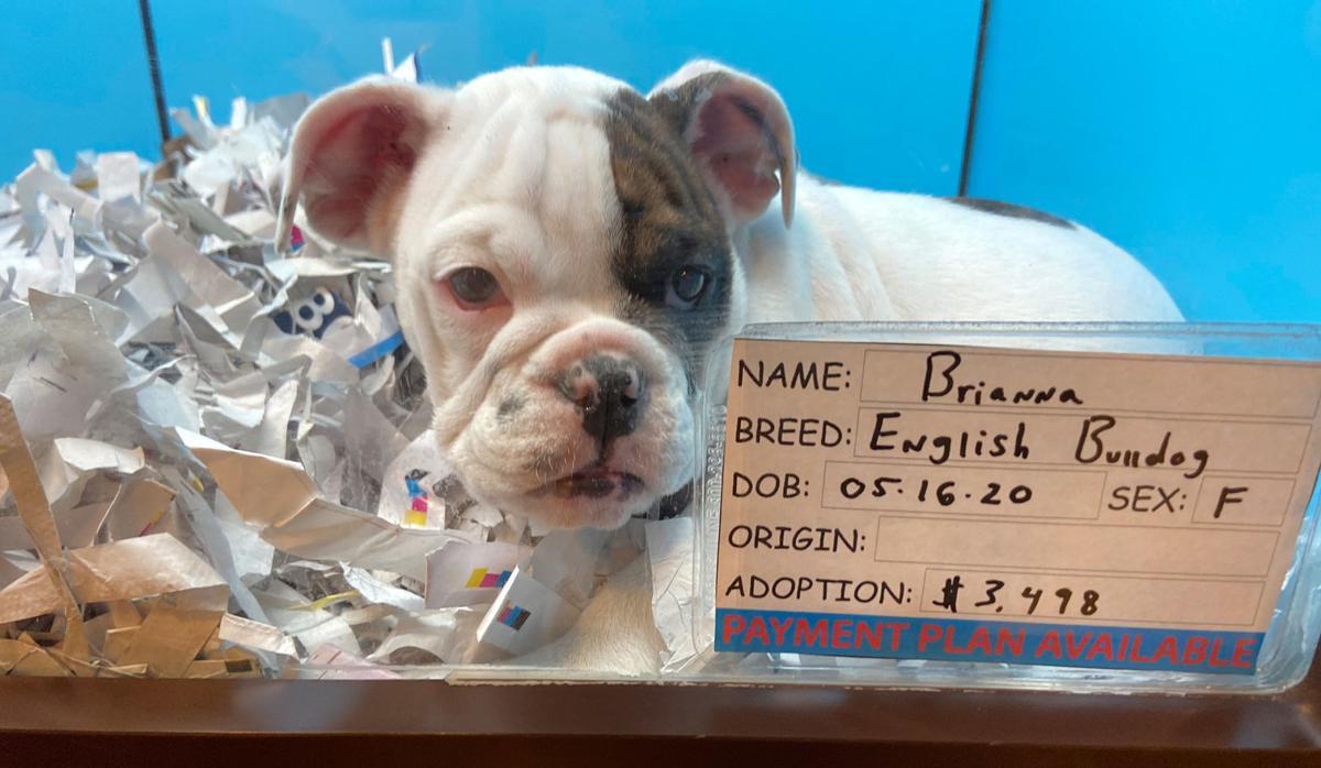 Puppy World Rescue