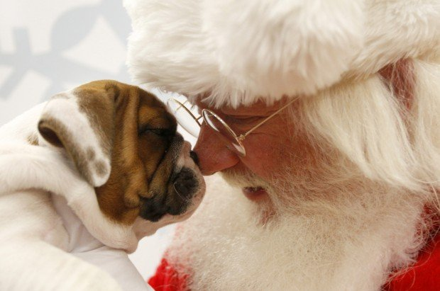 Santa harlow