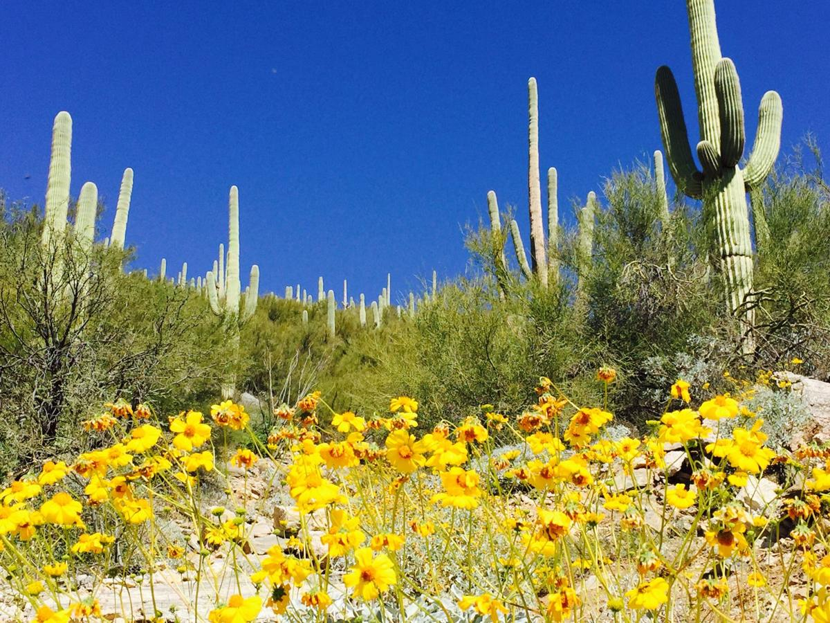 Blooms on the Soldier Trail