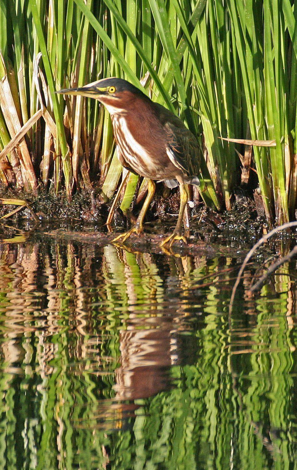 Morning Bird Walks — Sweetwater Wetlands