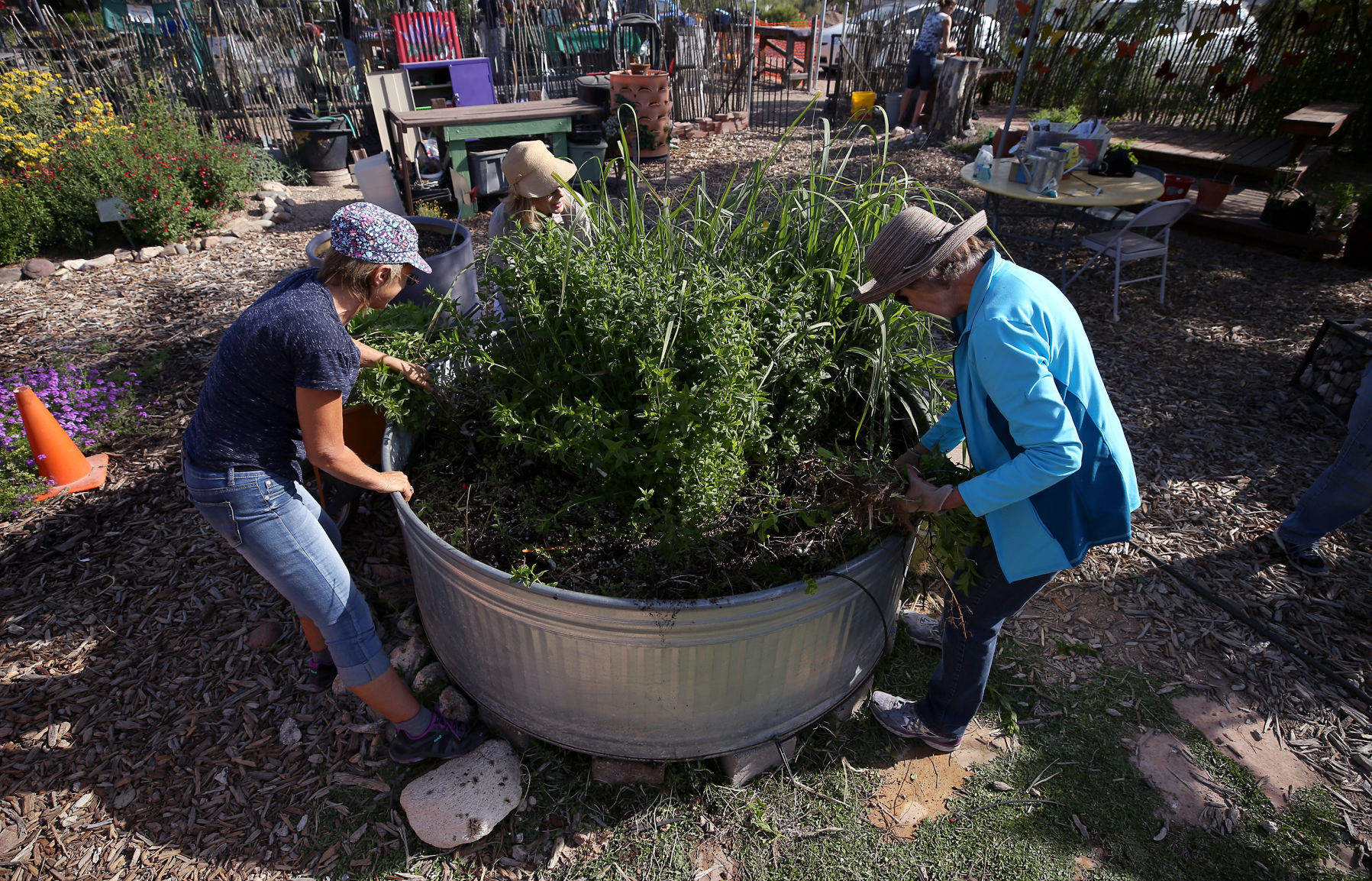 Tucson Gardening A Blow By Blow Look At Raised Beds Vs Basins Home Life Health Tucson Com