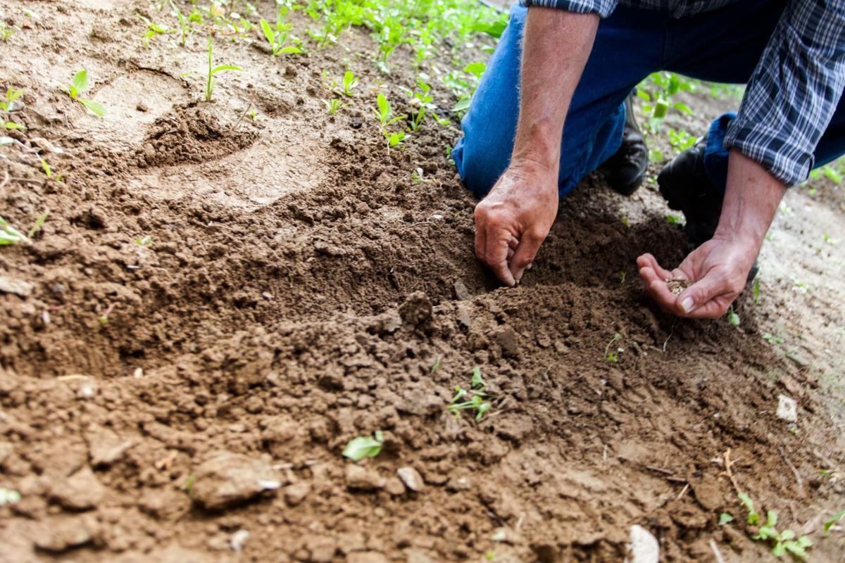 5 ways to prep your garden for spring   Home & Garden   tucson.com