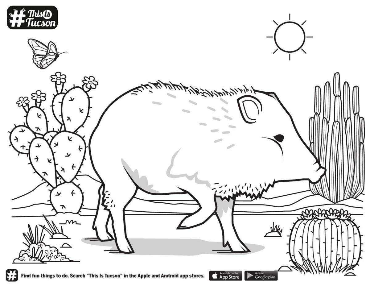 Javelina cactus coloring page