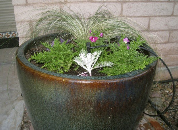 try no fuss way to water plants - Water Garden Plants