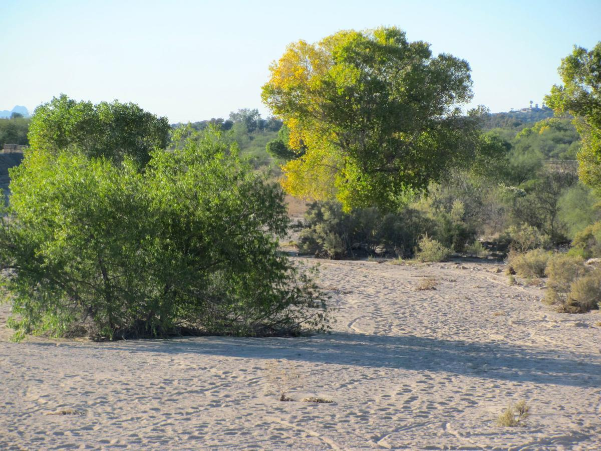 This Tucson river path offers a bit of solitude and soothing
