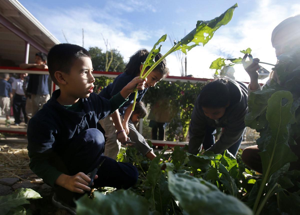 Manzo Elementary garden program