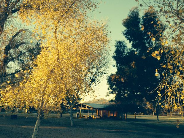 Photo of the day: Autumn in late January for Tucson