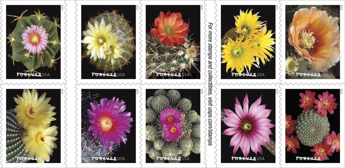 Usps Christmas Stamps 2019.Tucsonan S Cactus Blossom Photos Land On New U S Stamps