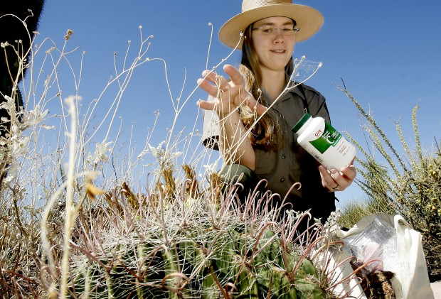Native plants are valuable resource for desert dwellers