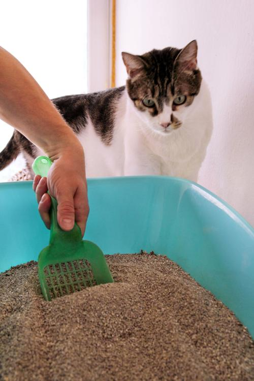What To Do If Your Cat Refuses to Cover Its Poop