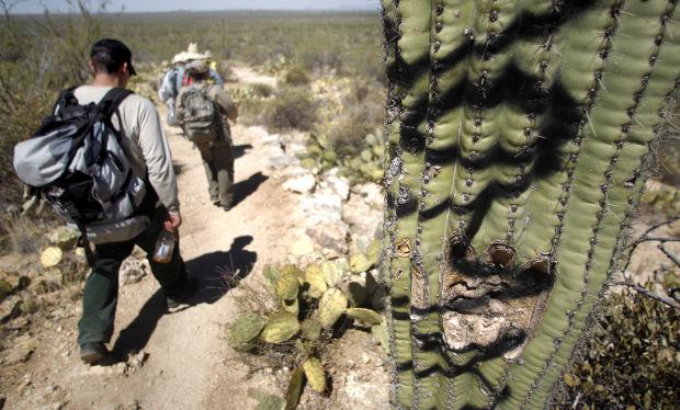 Saguaro National Park testing 'Elephant Snot' to remove cacti graffiti