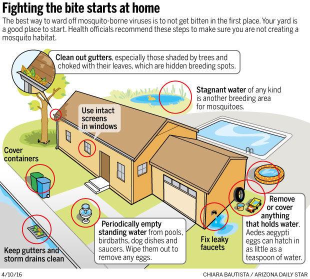 Rain Breeds Zika Mosquitoes Local News Tucson