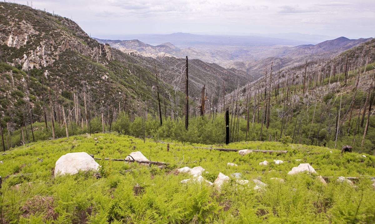 Summerhaven: Guided Mount Lemmon Hike