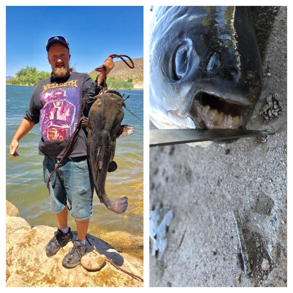 unusual fish found in Arizona