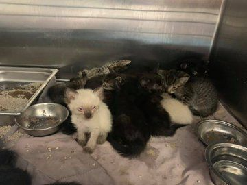PACC takes in cats in hoarding case