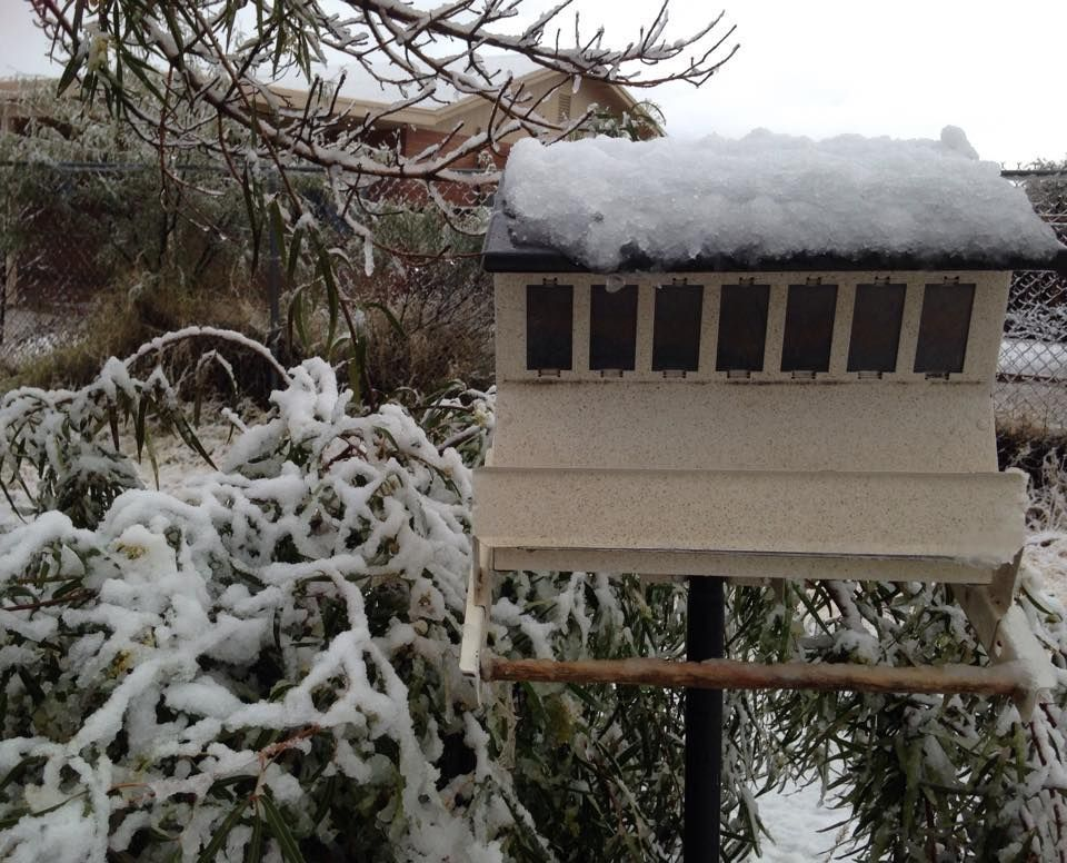 Star reader snow photos
