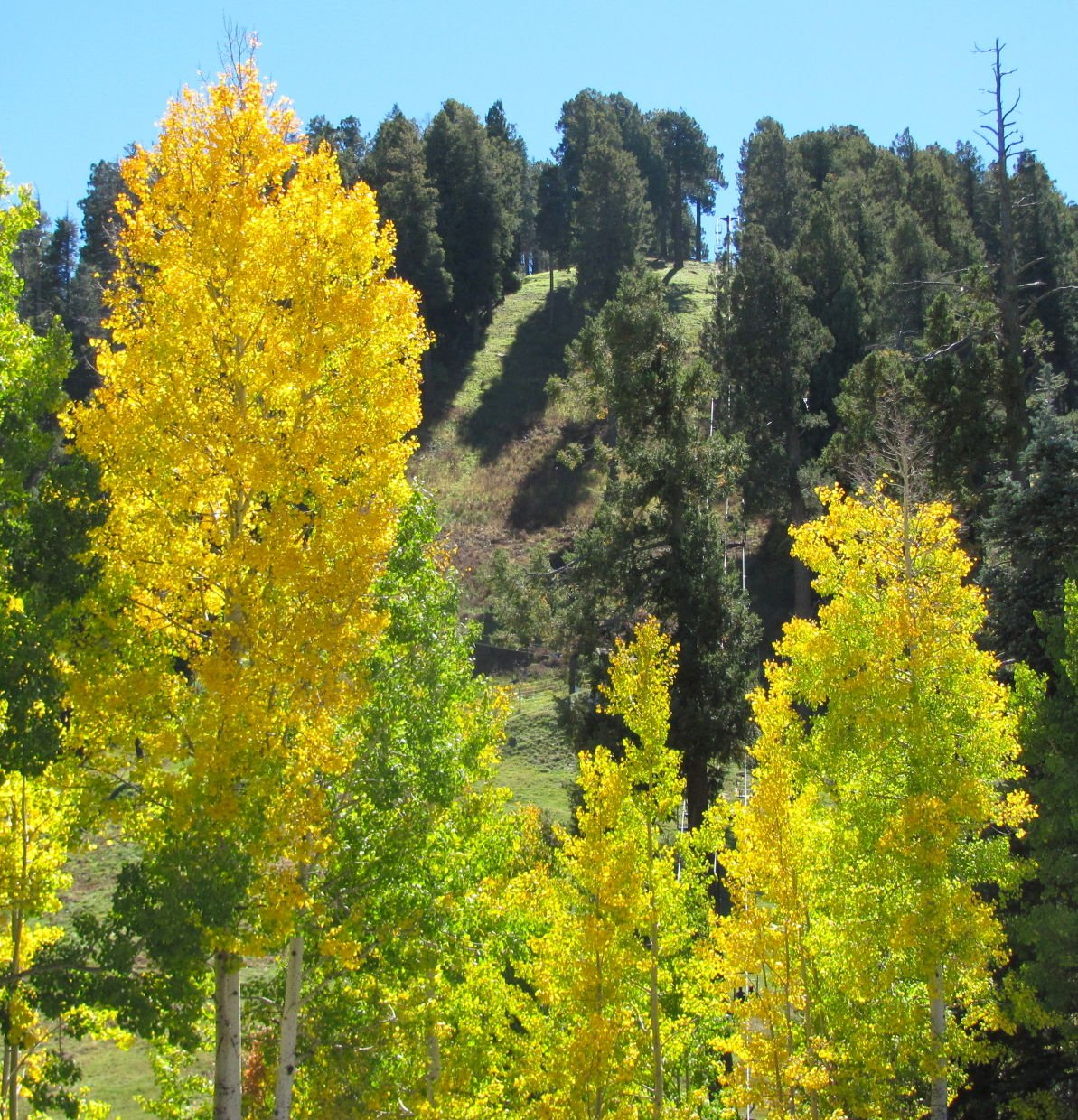 Photos: Fall foliage in Southern Arizona | Outdoors and Events ...