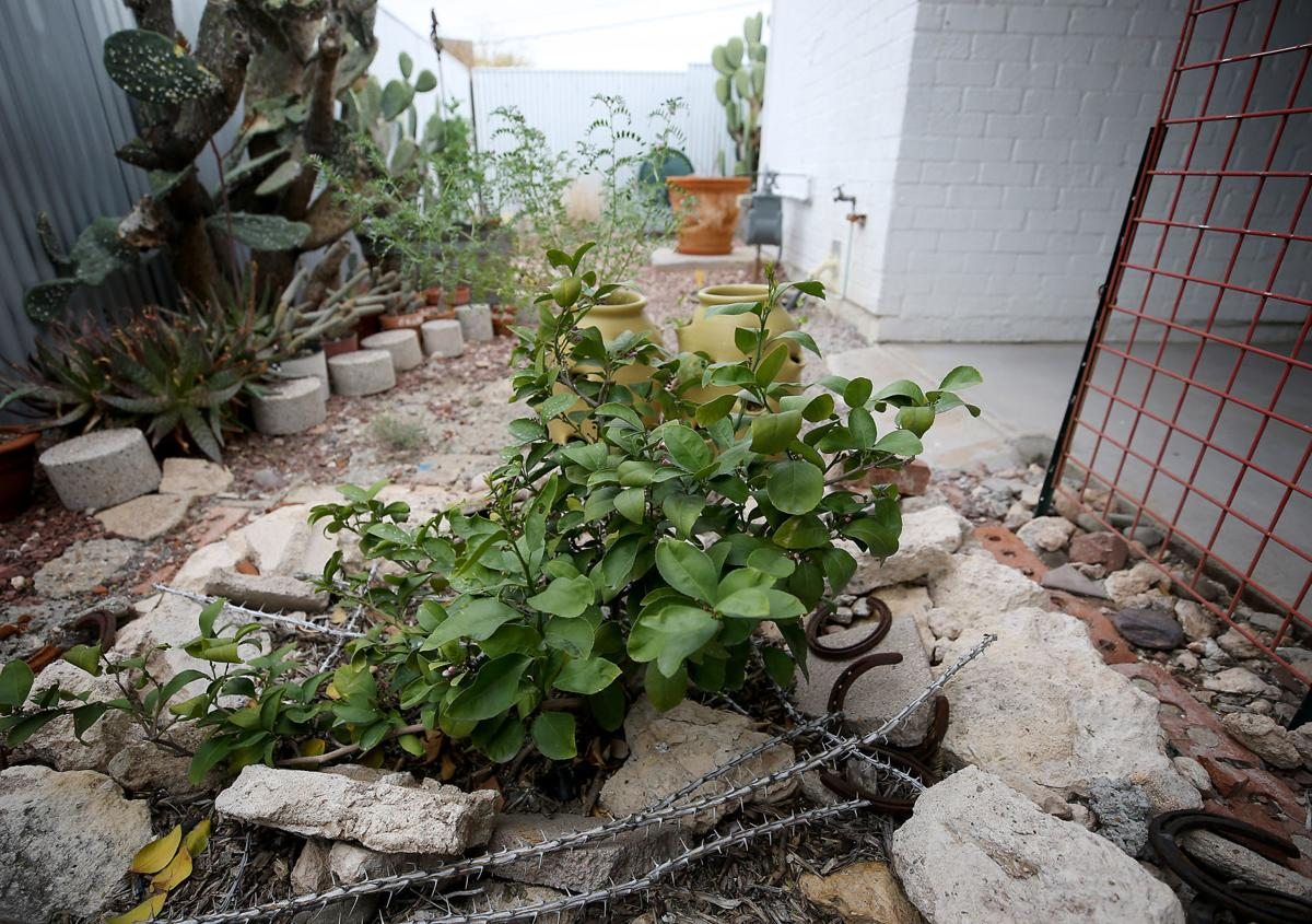 Water harvesting program builds up Tucson community, environment ...
