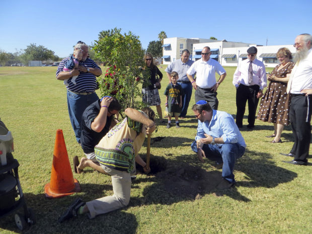 Tree planted for Anna Greenberg