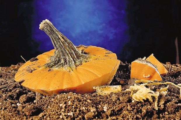 Composting with pumpkin (copy)