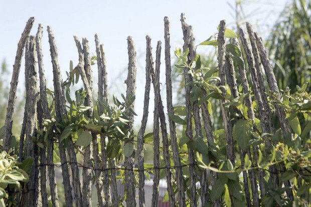 how to make an ocotillo fence