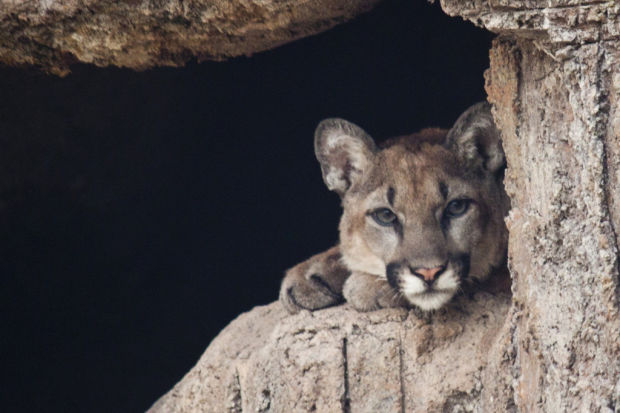 Museum's lion cub to get his name today