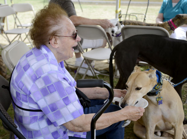 Southern Arizona Greyhound Adoption Ice Cream Social